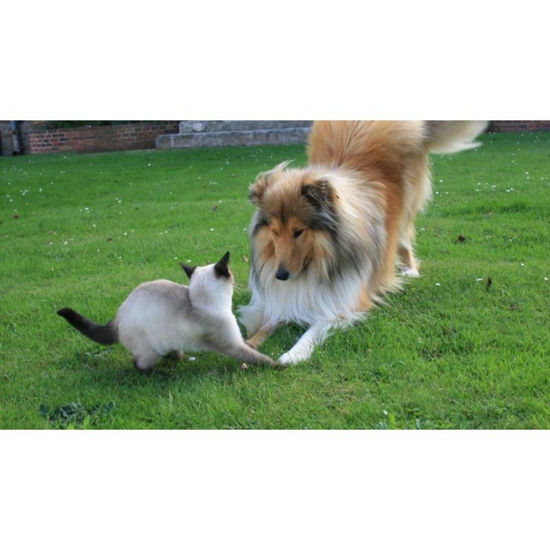 Covid-19 : vos animaux de compagnie sont-ils à risque?